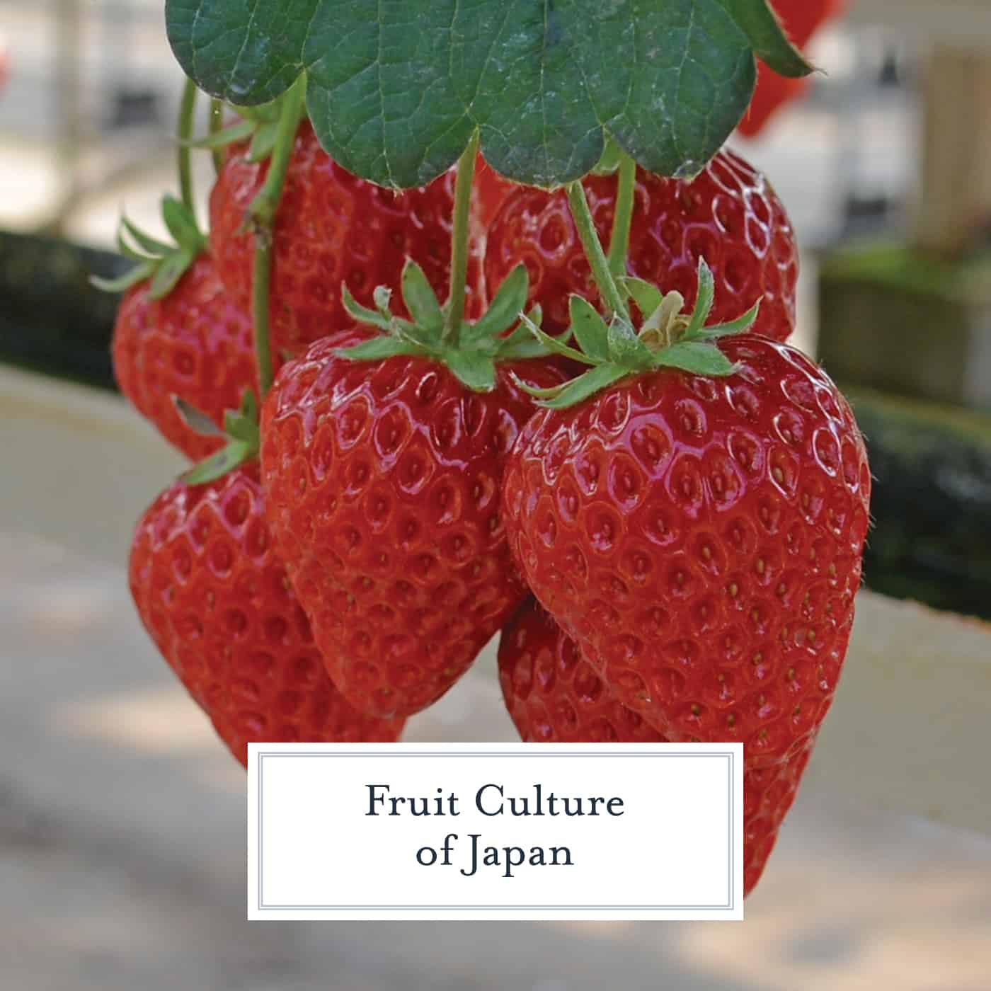 Strawberries aren't usually associated with Japan, but they grow some of the best strawberries in the world. Plan a strawberry picking adventure during your vacation!#japan www.savoryexperiments.com