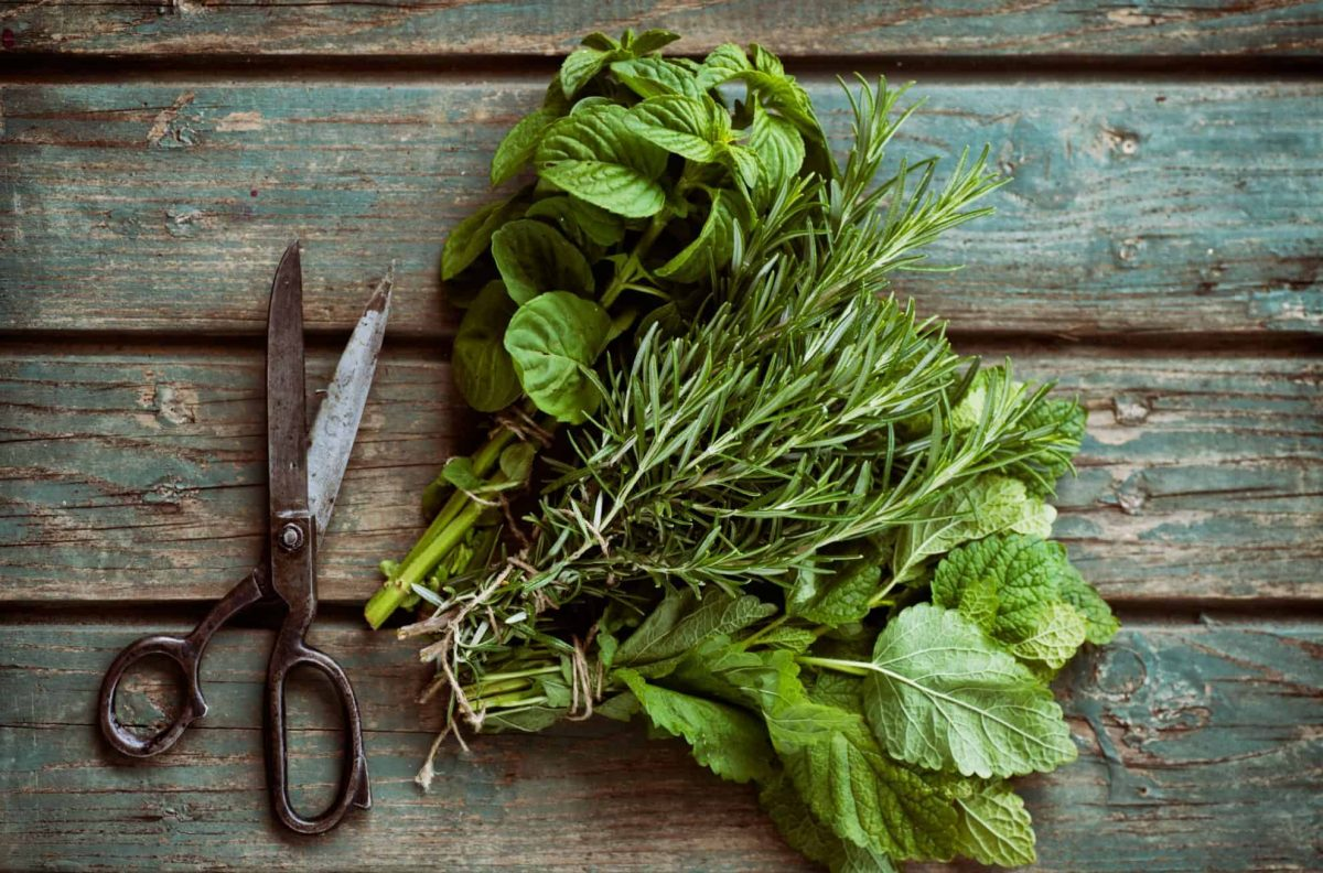 Freshly cut herbs