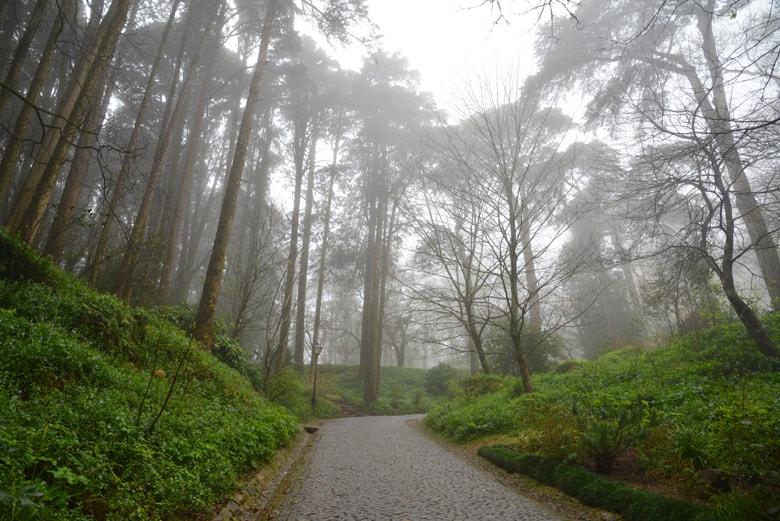 Trees around Sintra