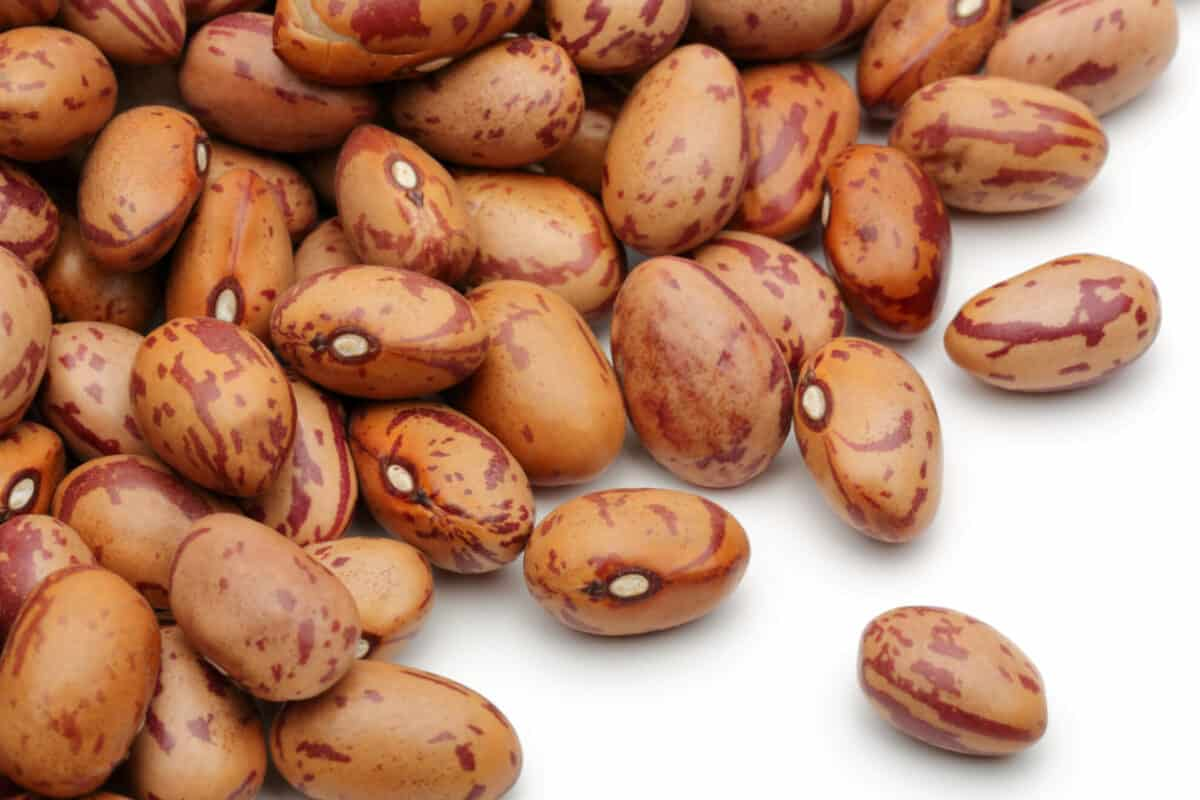 dry pinto beans on a white background