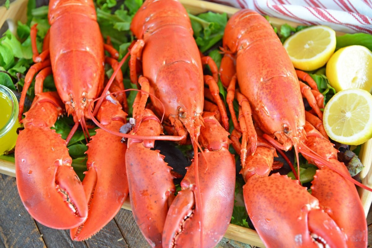 close up of steamed lobsters