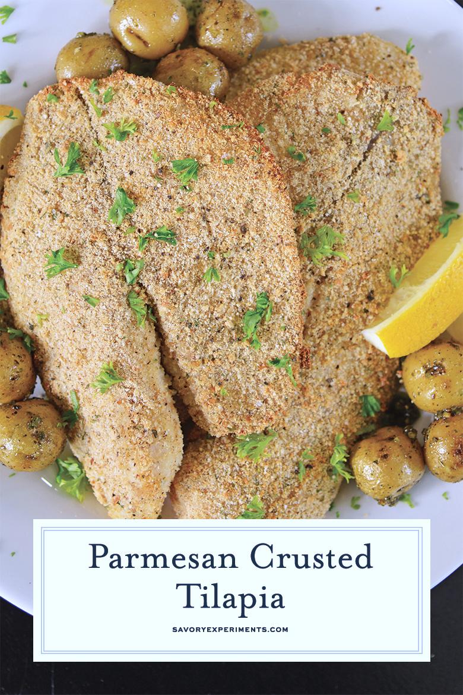 parmesan crusted tilapia close up