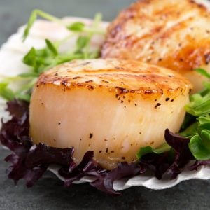 pan seared scallop
