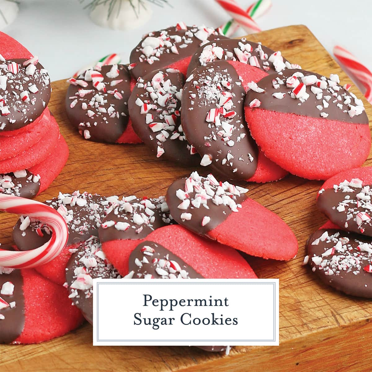 peppermint sugar cookies dipped in chocolate with candy canes