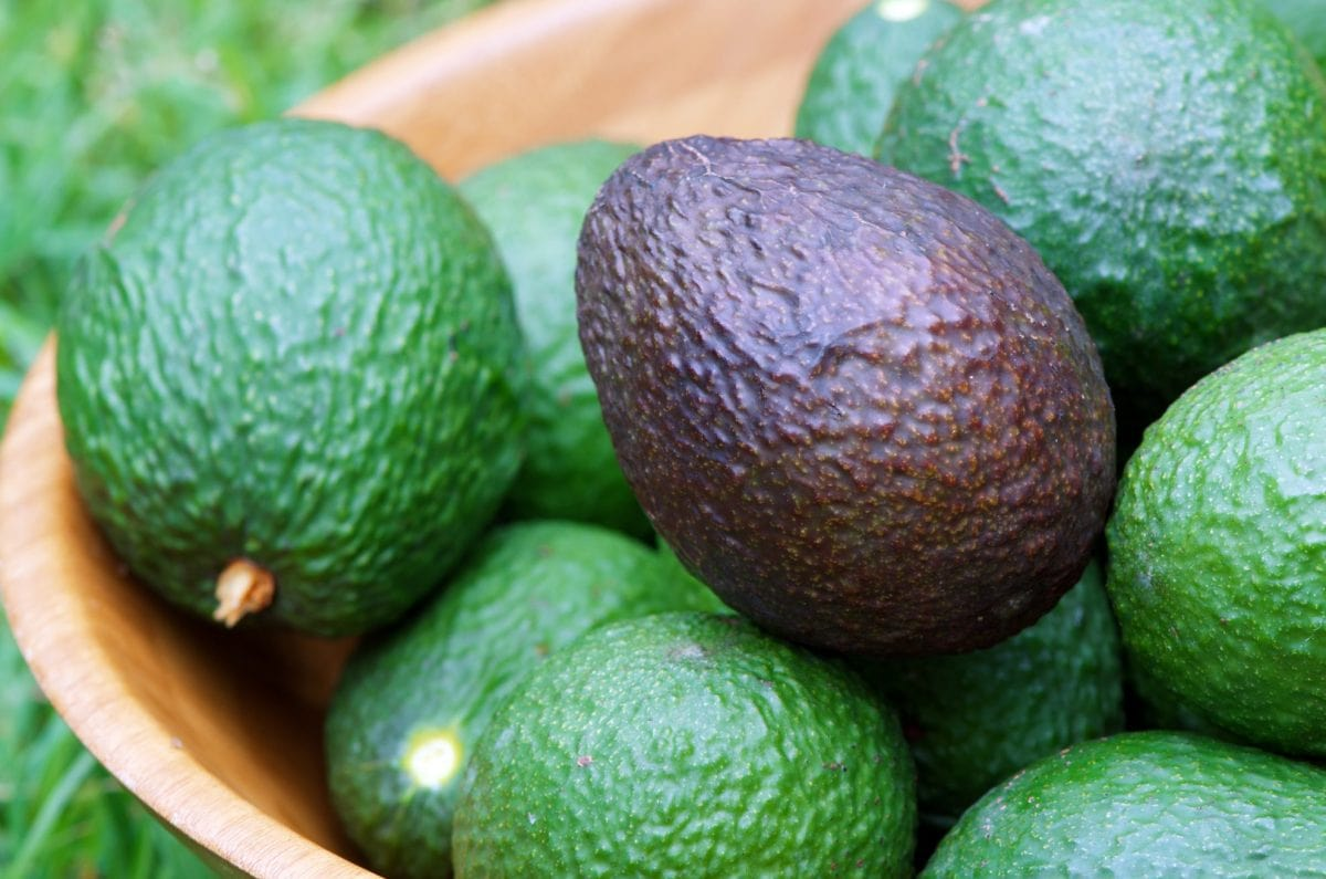 bowl of avocados with one ripe